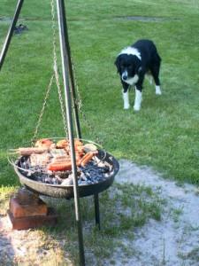 Bild von Hund vor dem Grill